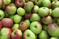 Kelteräpfel für Herbstfest 2017 gesucht